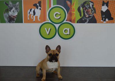 Accueil au sein des Cliniques Vétérinaires d'Aunis