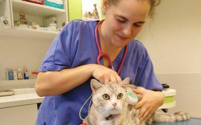 Brève d'Aunis : Une nouvelle vétérinaire rejoint l'équipe