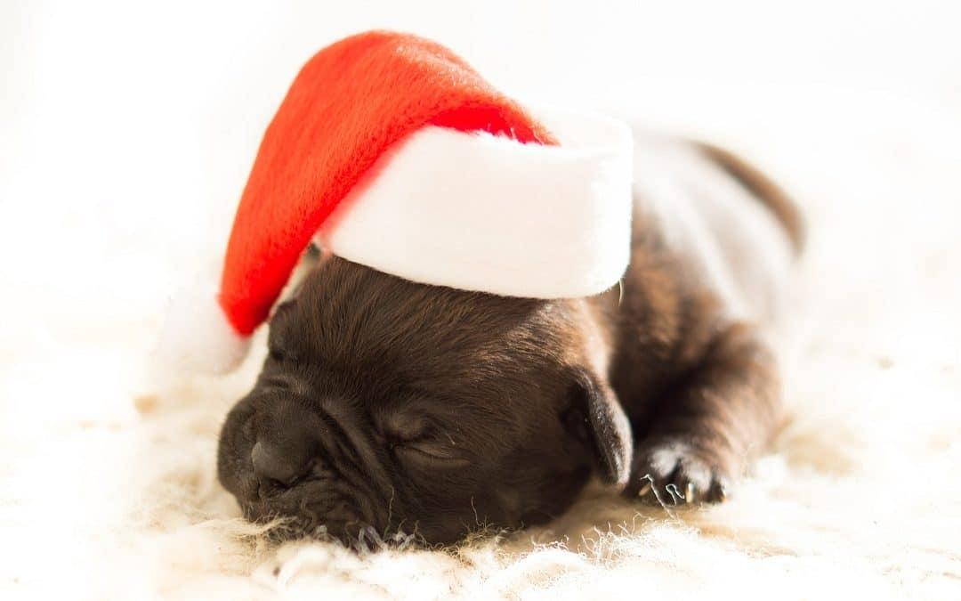 Joyeux Noël et Bonnes Fêtes