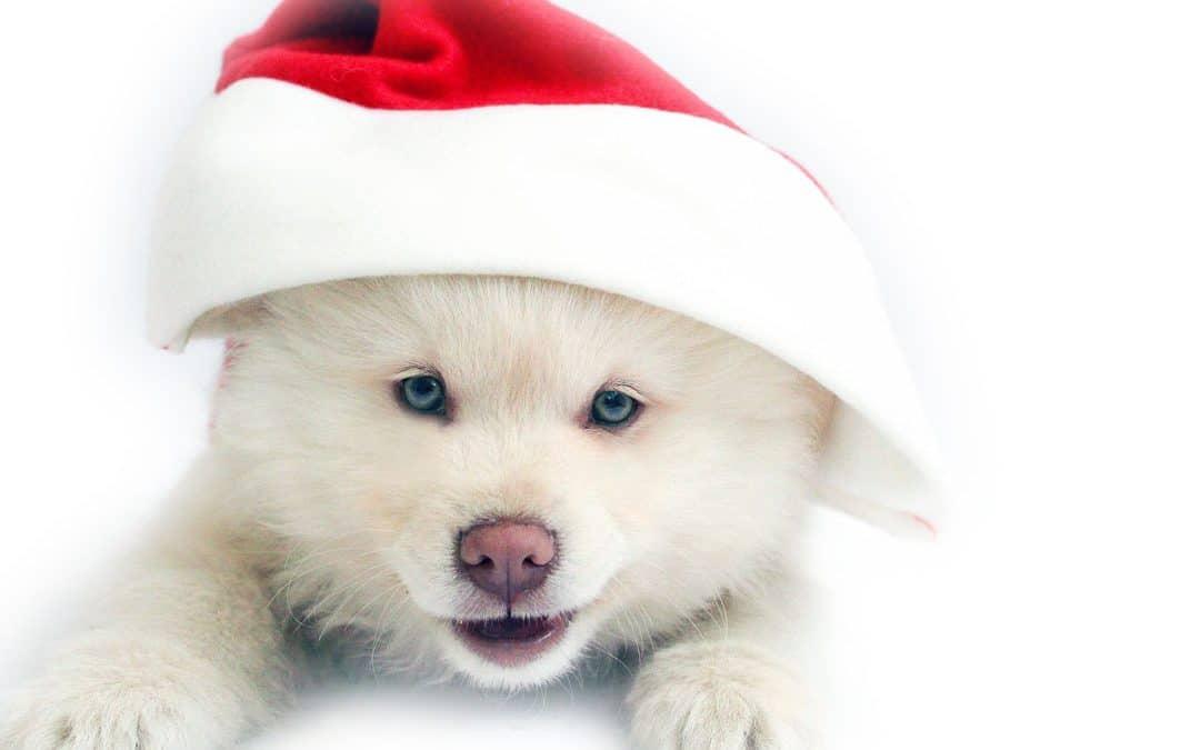 Jeu Concours de Noël