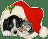 CVA : Chiens de Noël