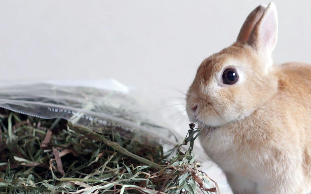 L'alimentation de base du lapin